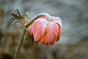 frozen-3840163_640